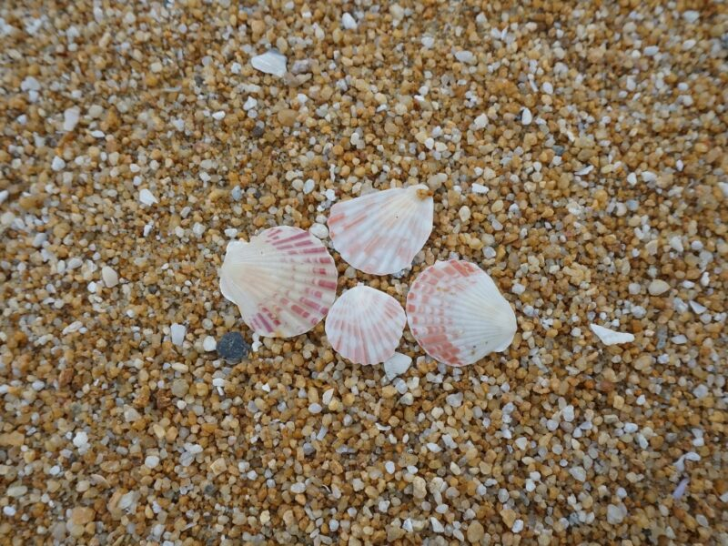 shells on shore